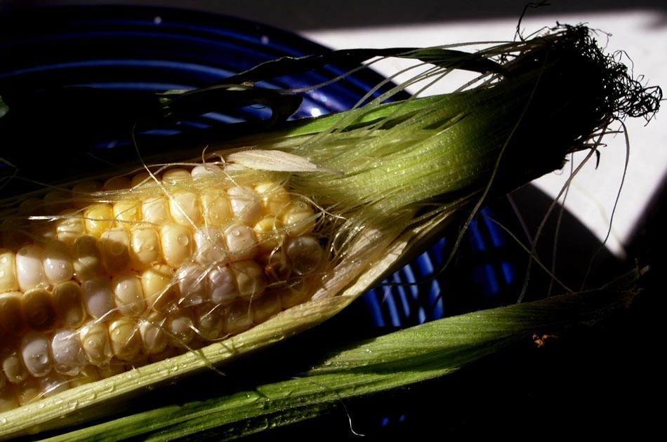 corn-summer-food-valley-news
