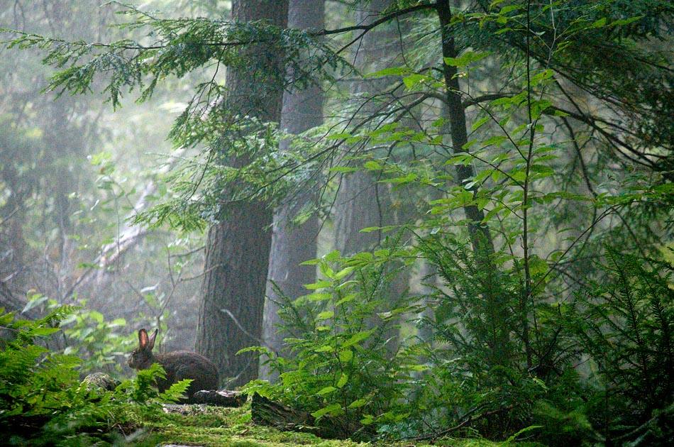beagle-hunting-randolph-vt-002