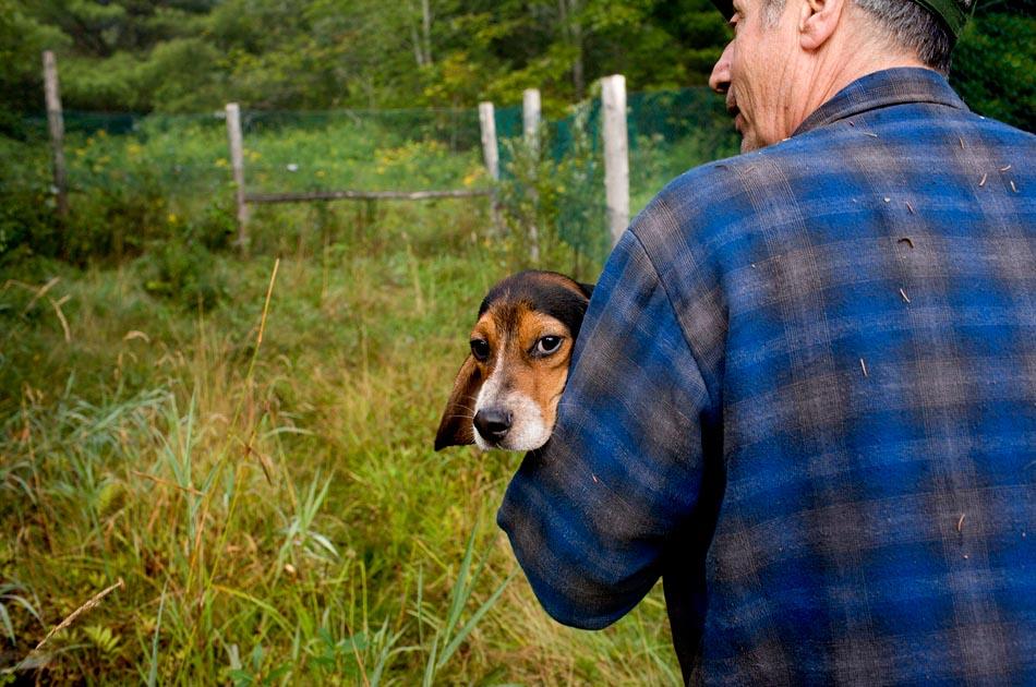 beagle-hunting-randolph-vt-003