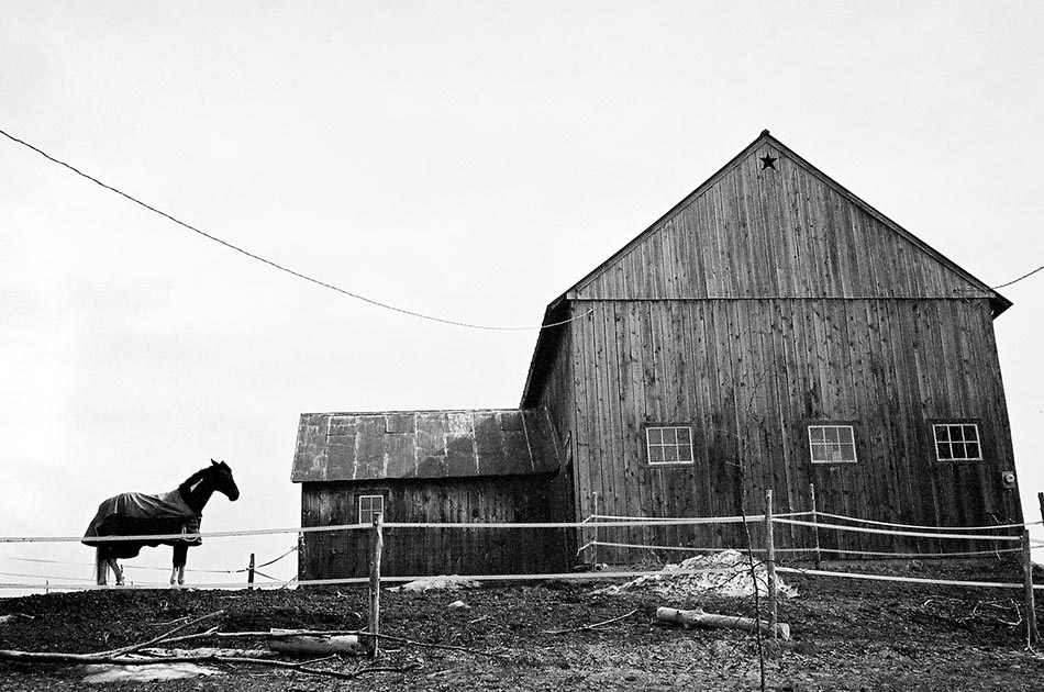 horse-tunbridge-vt