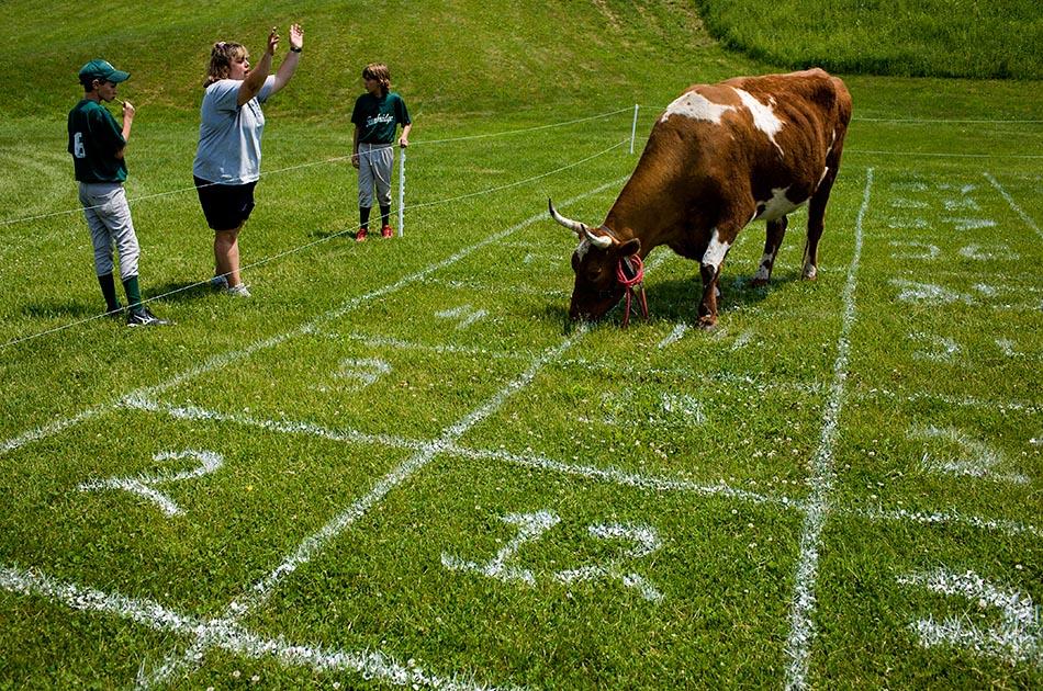 Cow Plop Bingo
